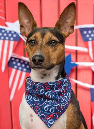 Patriotic Ribbons Over The Collar Bandana