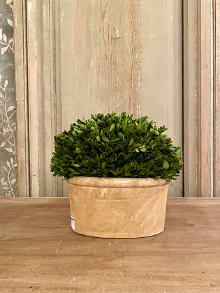 Potted Preserved Boxwood