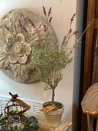 Potted Lavender Topiary