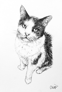 Harry's Pencil Portrait