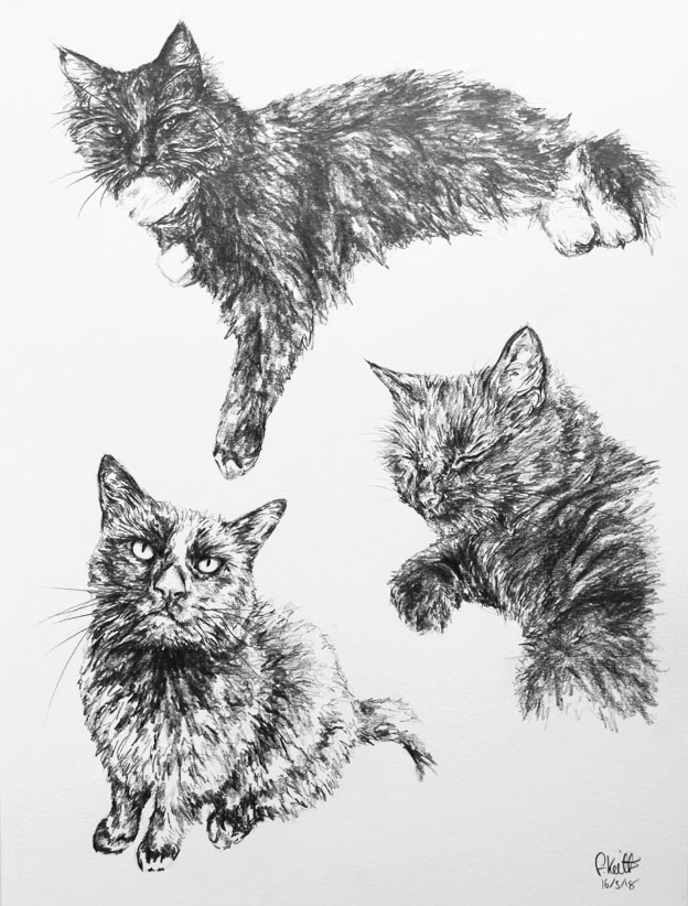 Group Cats