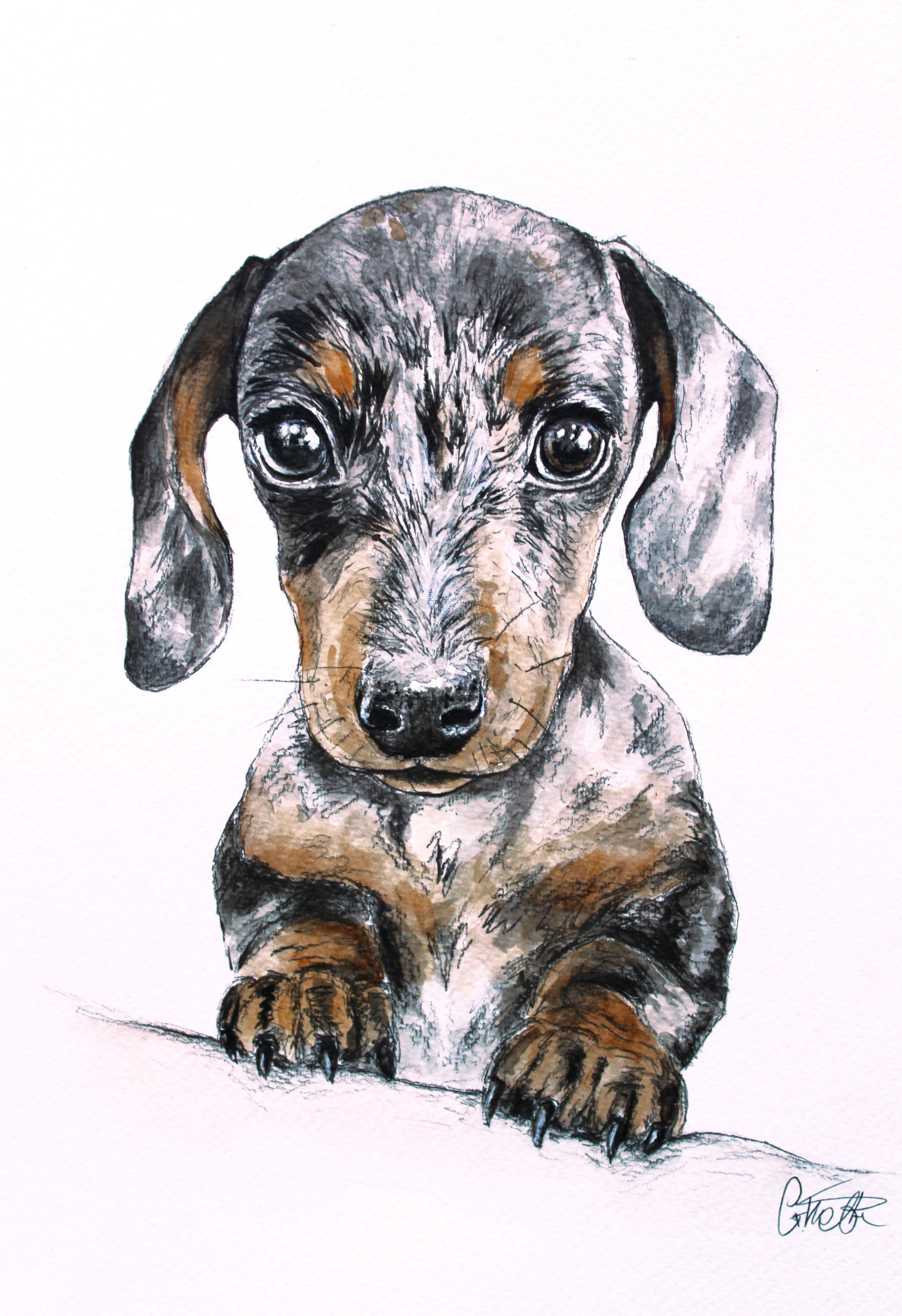 Darcy's Watercolour Portrait