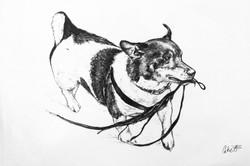 Barney's Pencil Portrait