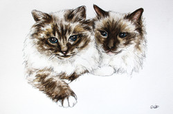 Cosmo and Coco's Watercolour Portrait