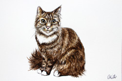 Pepper's Watercolour Portrait