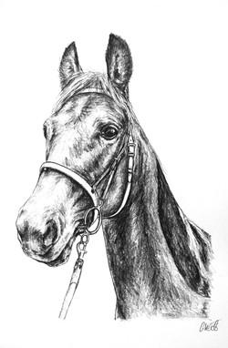 Midge's Large A3 Pencil Portrait