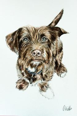 Bertie's Watercolour Portrait
