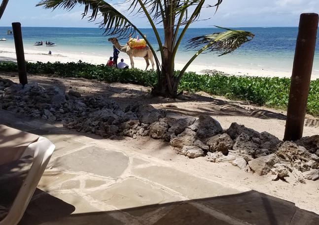 Relaxing in Mombasa.jpg