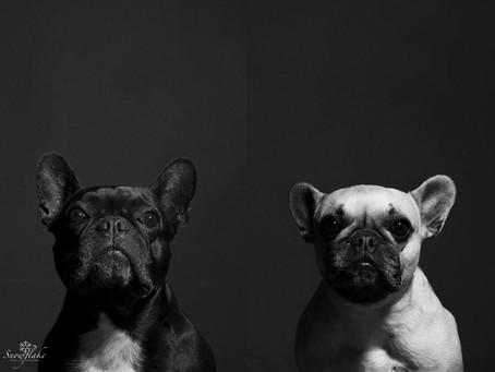 Pet Portraits - the furry kids