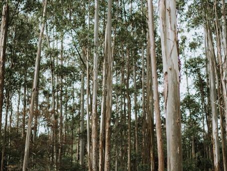 EDITORIAL MINIMAL FOREST