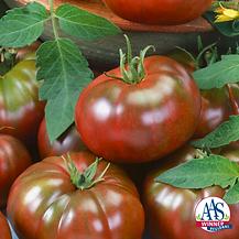 Tomato_Chefs_Choice_Black_Logo-768x768 a