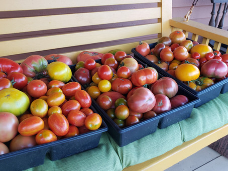 Heirloom and Hybrid Tomatoes - Which is Best and What is the Difference?