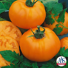 TomatoChefsChoiceOrange.120-768x768 aas.