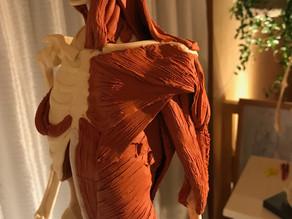 ピラティス指導者の幅が広がる、3D解剖学講座