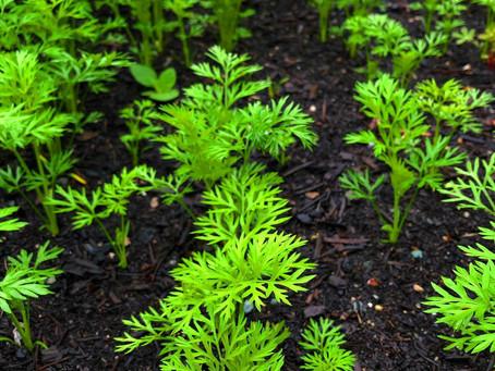 Sustainable Garden Checklist - June