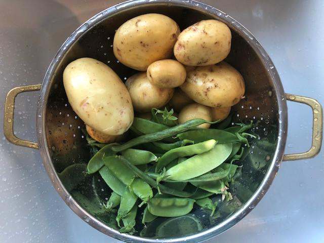 last nights' potatoes and peas harvest