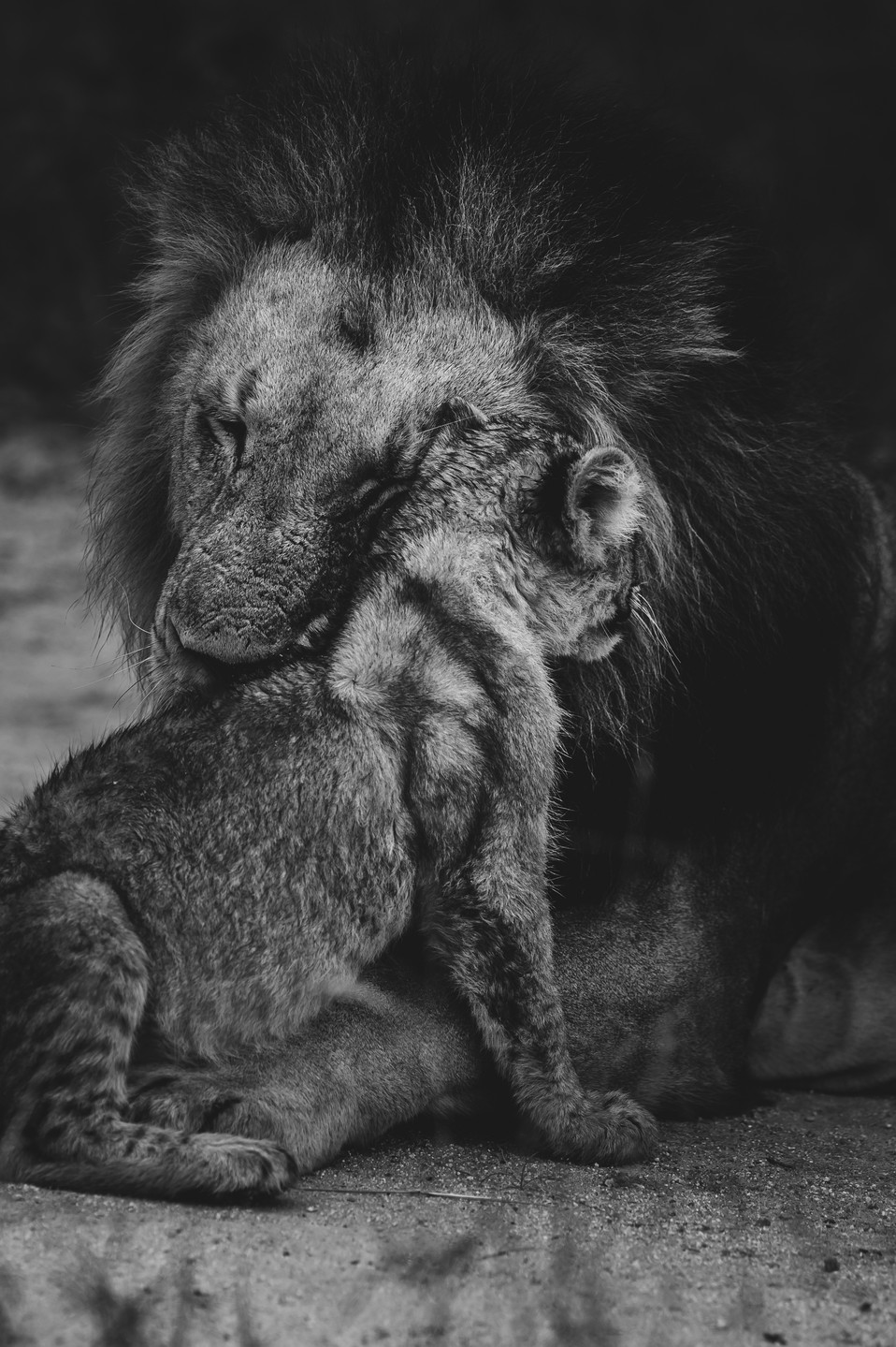 Lion | Black and White