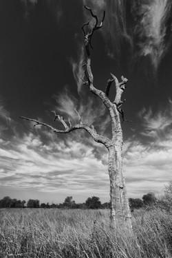 Singita Kruger National Park
