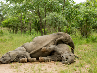 TRUNK AND DISORDERLY