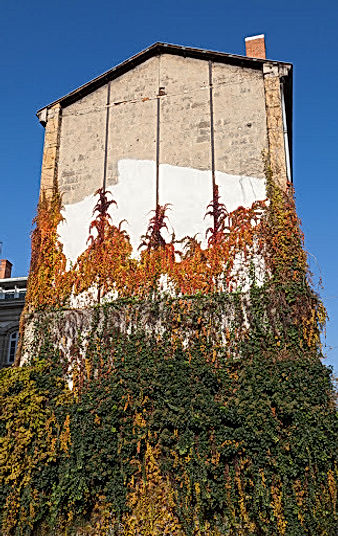 Pignon d'un bâtiment recouvert à sa base d'une végétation luxuriante en automne