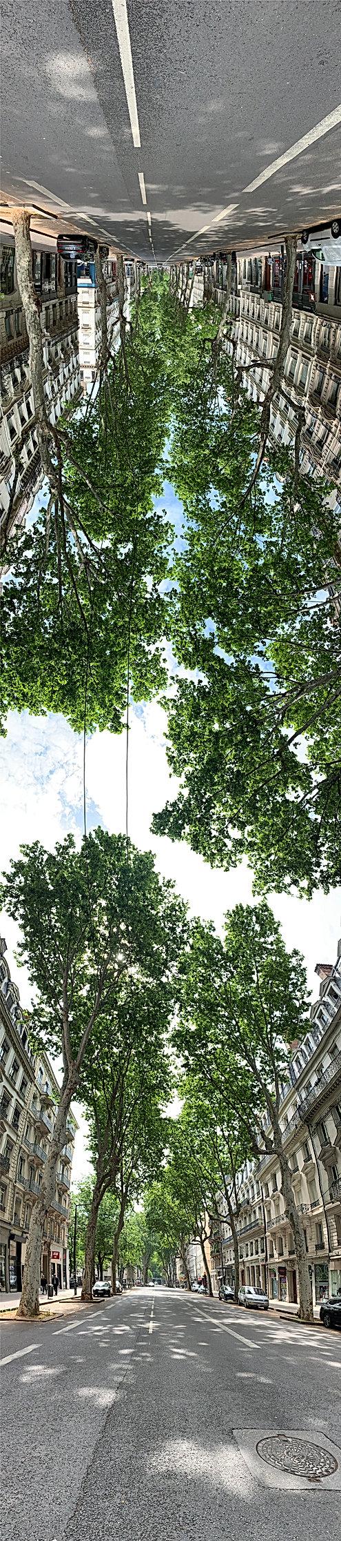 photo panoramique verticale prise avenue de Saxe vers la rue Bugeaud montrant les immeubles et les arbres, le bas à l'endroit, le haut à l'envers