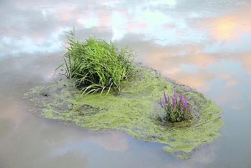 Végétation au milieu d'une eau qui réfléchit le ciel et les nuages