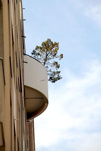 En contre-plongée, d'un balcon d'un immeuble moderne un arbre sort et se détache sur le ciel