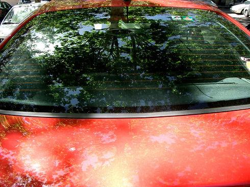 Réflexion d'arbres sur un pare-brise et sur le capot avant d'une voiture rouge
