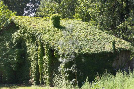 Une chaumière recouverte entièrement de lierre dans un décors de végétaux foisonants