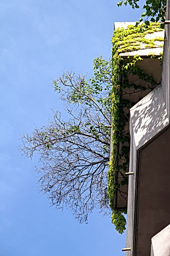 Photo en contre-plongée, du lierre se propage sur un balcon morderne et un arbre en sort, se détachant sur le ciel