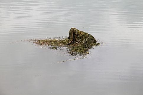 Au milieu de l'eau, un objet sort de la surface et retient des algues