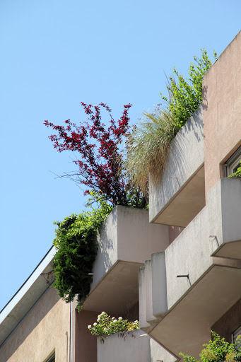 Sur des balcons d'immeubles modernes des plantes variées prolifèrent