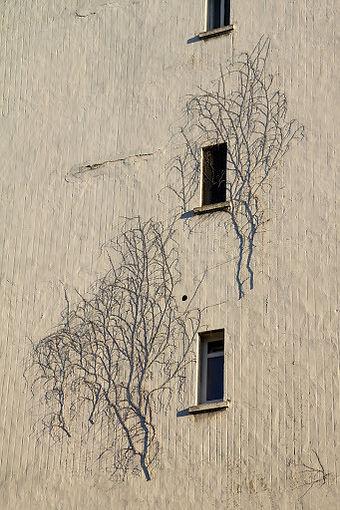 Un mur avec des restes de lierre séché accrochés