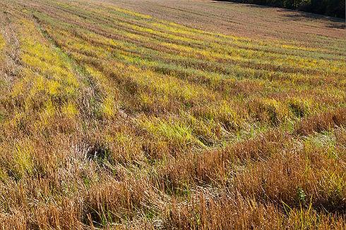 Traces de véhicules dans un champs fauché avec des teintes chaudes et variées.