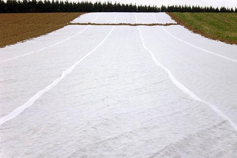 5 bâches de plastique blanc recouvrent la terre sur plusieurs dizaines de mètres.