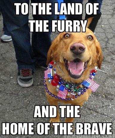 4th-dog.jpg