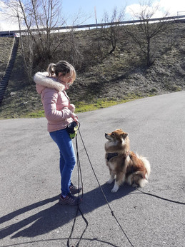 Educateur canin drômr ardèche