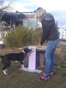 Eduction canine Drôme Ardèche