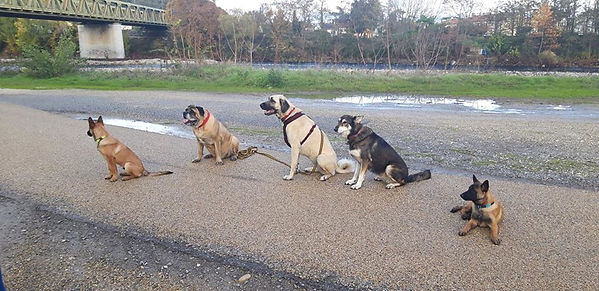 Dresseur chien Drôme Ardèche
