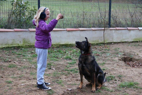 Educateur canin Drôme Ardèche