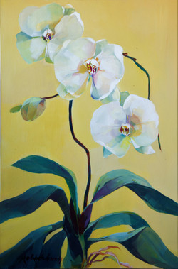 White Orchids in the Dragon Room
