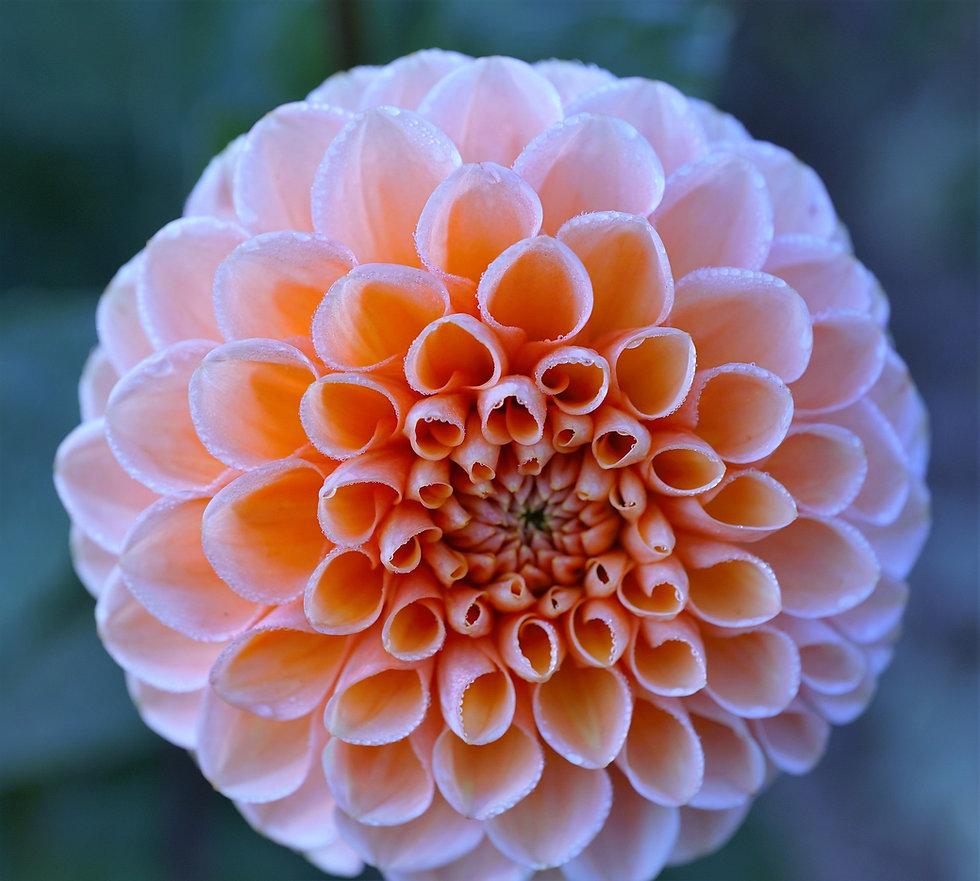 Flower Virtuessence Coaching & Massage