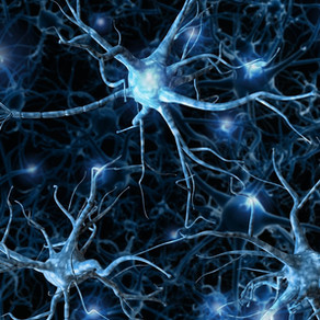 Press Release: NEUROPA initiative receives €3.6 million to develop new theranostic for the brain