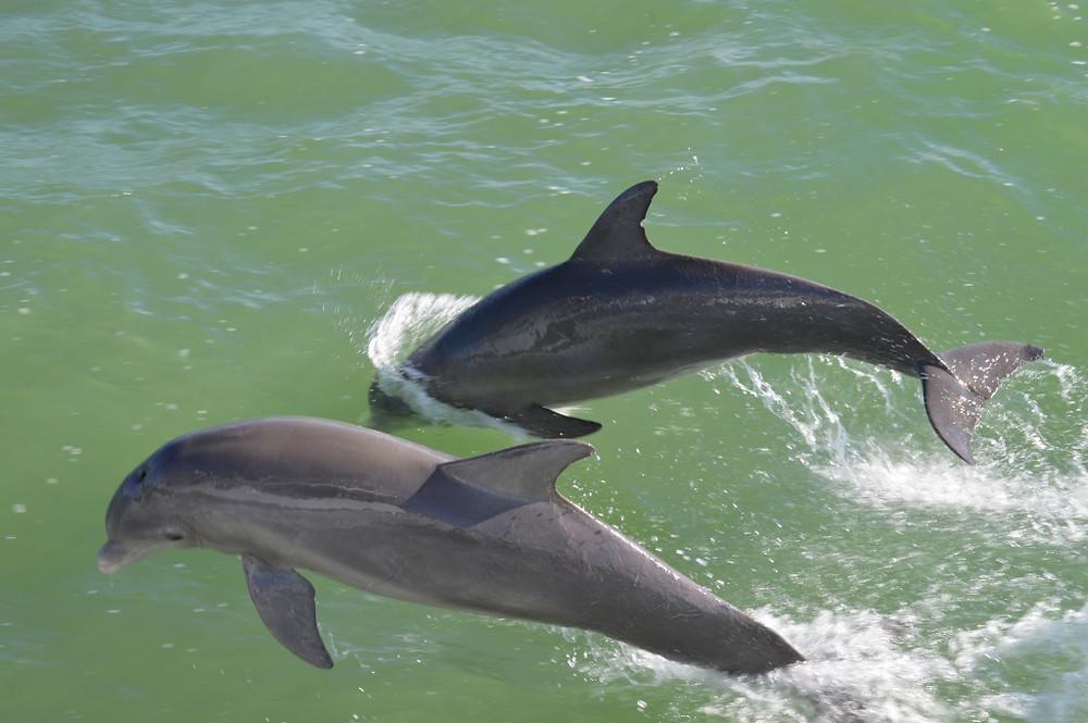 Dolphins - www.trainwithnicole.net