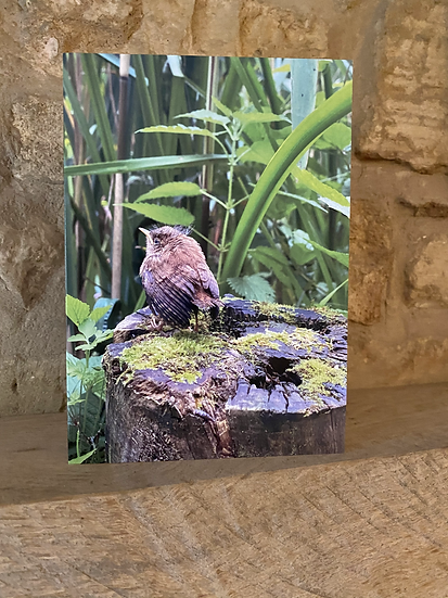 A card showing a bird sat on a tree stump in Nailsworth