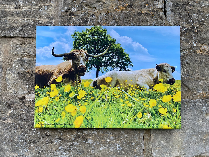 Cows & Clouds - Minchinhampton Canvas