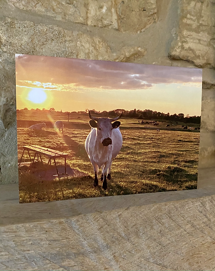A card showing a cow with a sunset behind it on Minchinhampton Common