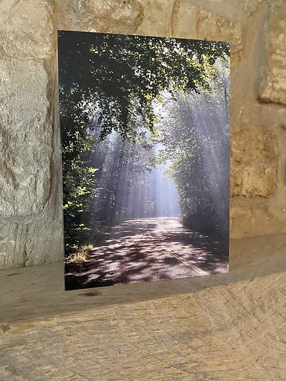 A card showing sun rays coming through the trees on Rodborough Common