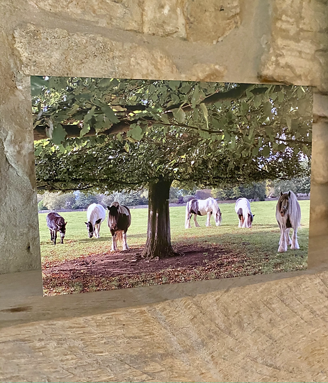 A card showing horses under a tree on Minchinhampton Common