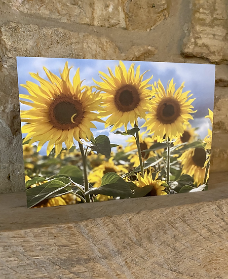 A card showing 3 sunflowers up close